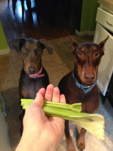 Our dogs love fresh veggies and fruit. When I get out the cutting board and start chopping, they come running in for their snack.
